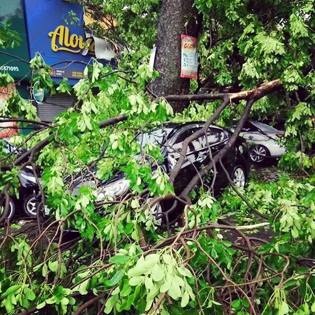 Ô tô của gia đình MC Phan Anh bị cây đè bẹp - 2