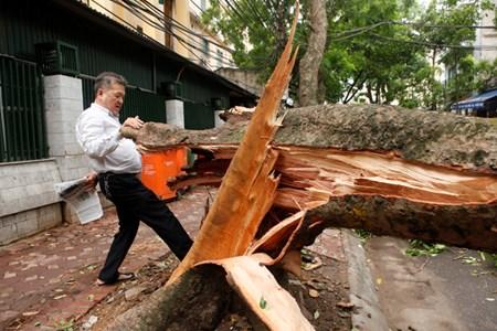 Giông lốc 2 người chết, gần 1.300 cây đổ: Hà Nội họp khẩn - 1