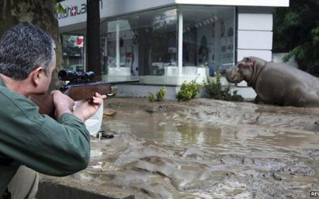 """Gruzia: Sau lụt, thú dữ xổng chuồng """"dạo chơi"""" khắp phố - 4"""