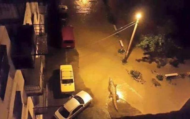 """Gruzia: Sau lụt, thú dữ xổng chuồng """"dạo chơi"""" khắp phố - 7"""
