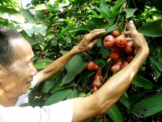 Lo Trung Quốc ngừng mua nhưng vẫn phải trồng - 1