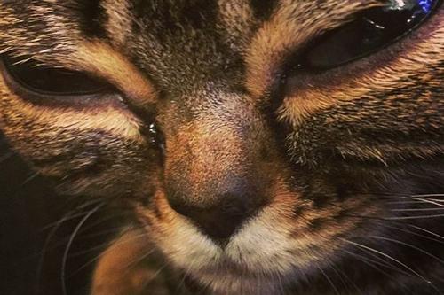 """Cận cảnh chú mèo """"ngoài hành tinh"""" gây sốt mạng xã hội - 2"""