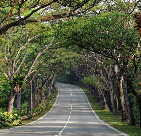 """5 loài cây tạo nên """"đảo quốc rừng xanh"""" Singapore - 2"""