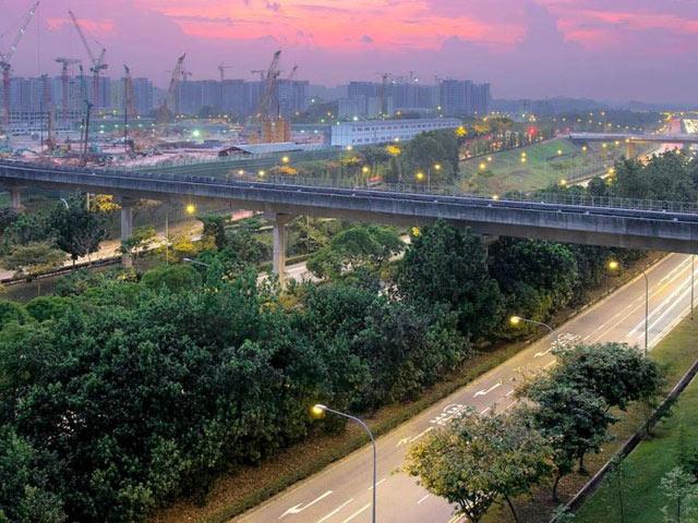 """5 loài cây tạo nên """"đảo quốc rừng xanh"""" Singapore - 1"""