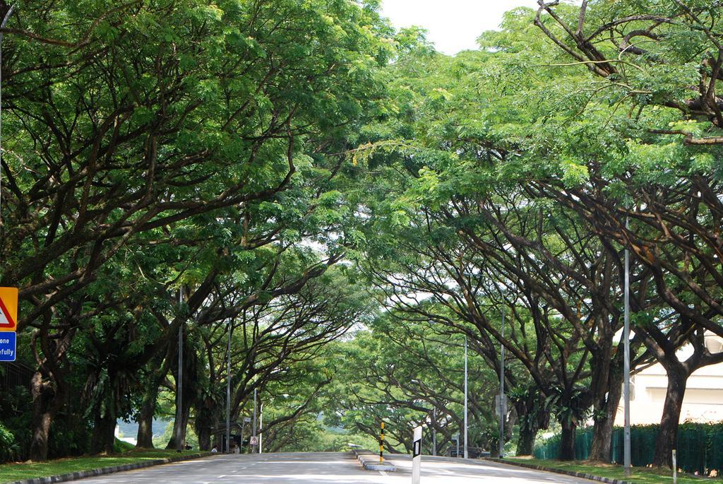 """5 loài cây tạo nên """"đảo quốc rừng xanh"""" Singapore - 3"""