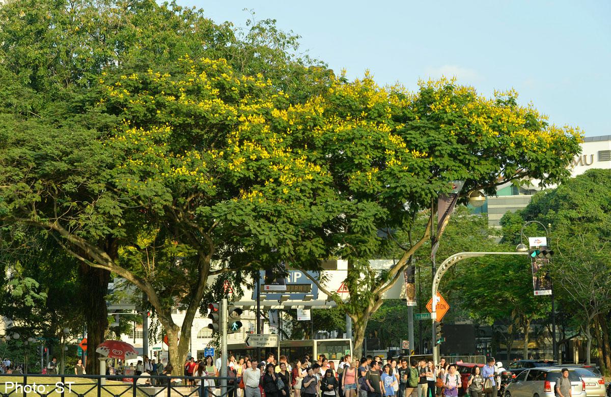 """5 loài cây tạo nên """"đảo quốc rừng xanh"""" Singapore - 7"""