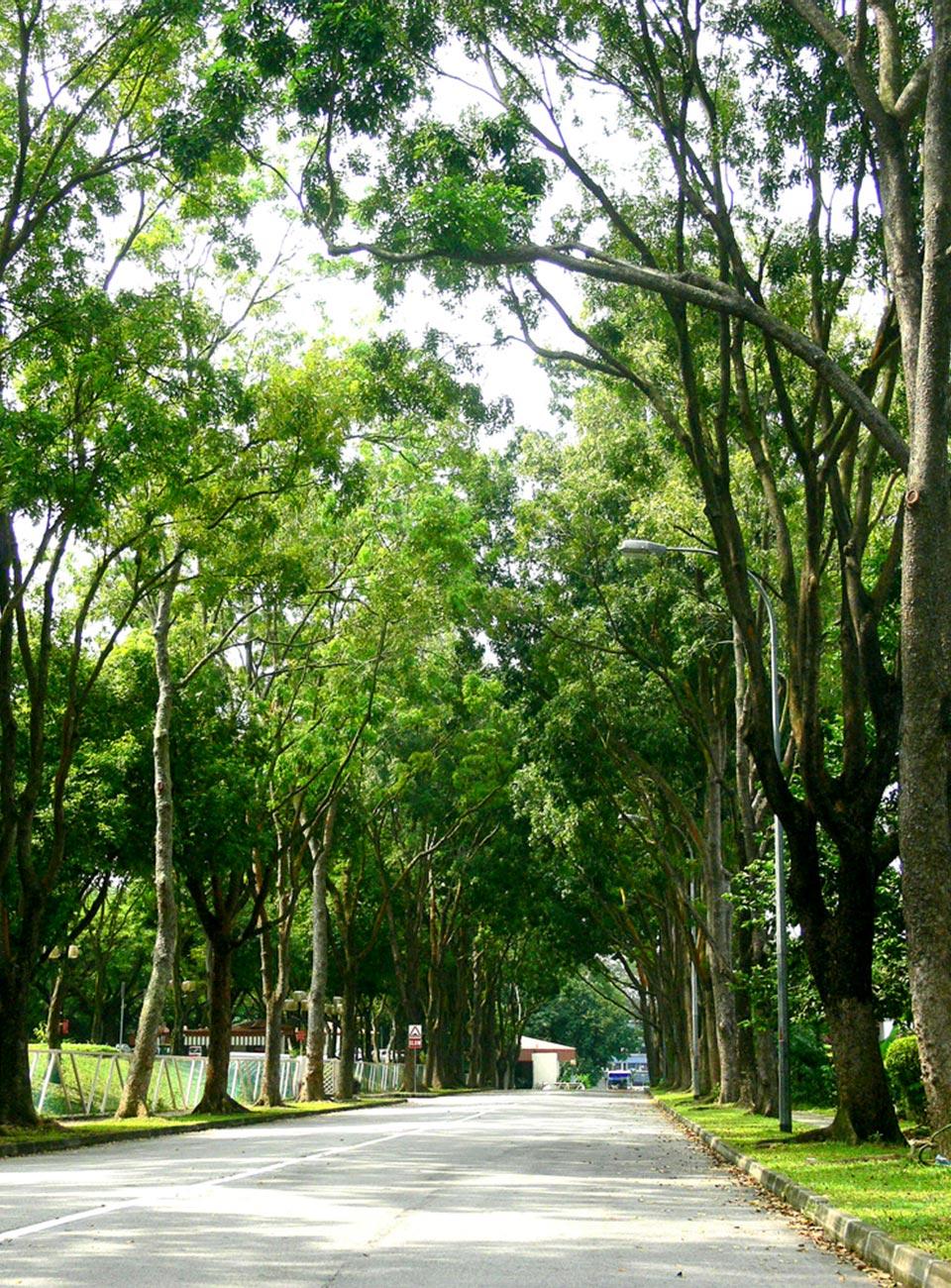 """5 loài cây tạo nên """"đảo quốc rừng xanh"""" Singapore - 8"""