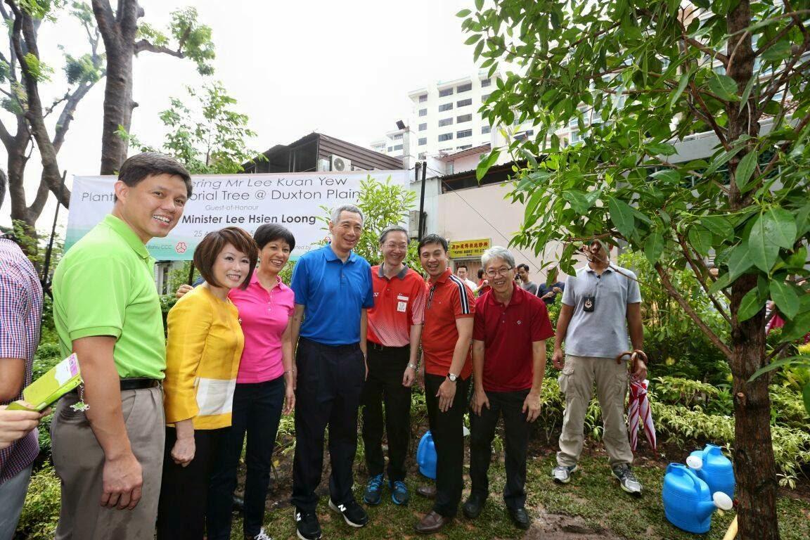 """5 loài cây tạo nên """"đảo quốc rừng xanh"""" Singapore - 11"""