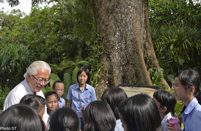 """5 loài cây tạo nên """"đảo quốc rừng xanh"""" Singapore - 9"""