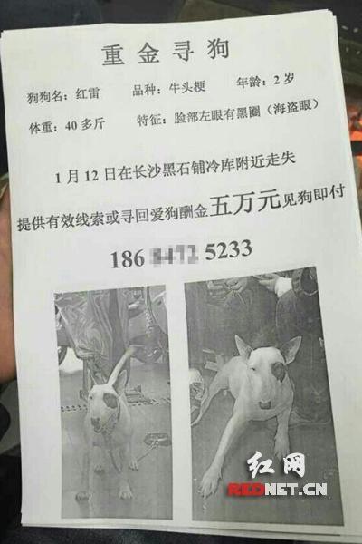 Đại gia treo thưởng 14 tỷ tìm chó mất tích - 2