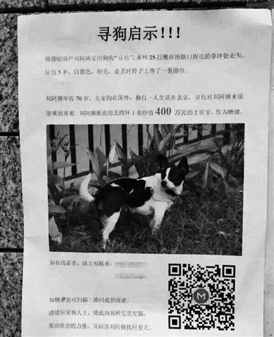 Đại gia treo thưởng 14 tỷ tìm chó mất tích - 1