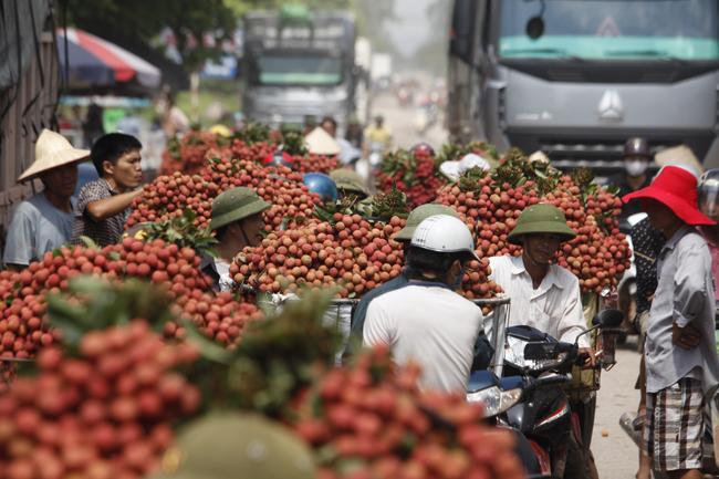 Dân Bắc Giang đội nắng, dầm mưa đi bán vải - 1