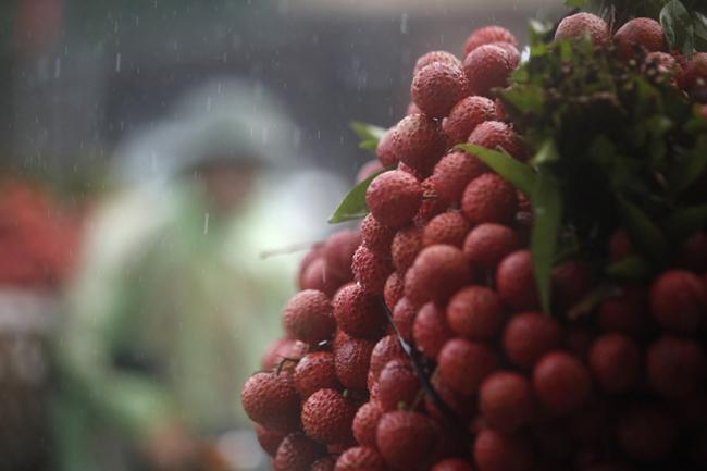 Dân Bắc Giang đội nắng, dầm mưa đi bán vải - 8