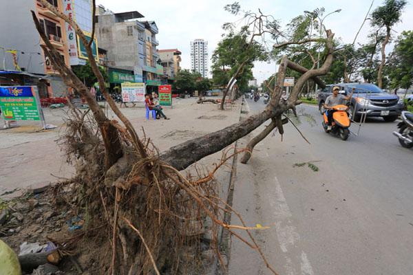 HN: 3 ngày sau dông lốc, cây đổ vẫn ngổn ngang trên đường - 3