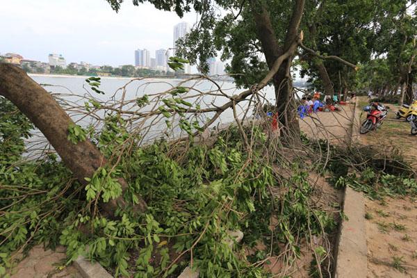 HN: 3 ngày sau dông lốc, cây đổ vẫn ngổn ngang trên đường - 2