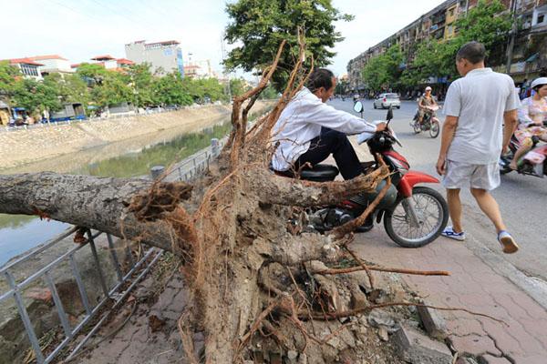 HN: 3 ngày sau dông lốc, cây đổ vẫn ngổn ngang trên đường - 6