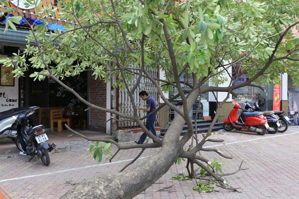 HN: 3 ngày sau dông lốc, cây đổ vẫn ngổn ngang trên đường - 9