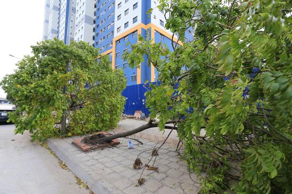 HN: 3 ngày sau dông lốc, cây đổ vẫn ngổn ngang trên đường - 8