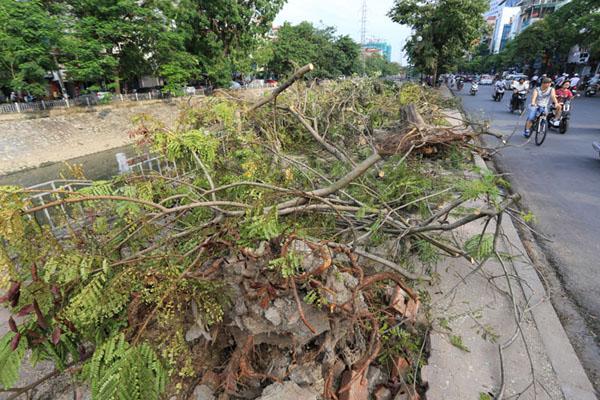 HN: 3 ngày sau dông lốc, cây đổ vẫn ngổn ngang trên đường - 5