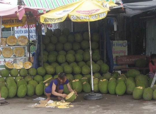 Mít Thái đầy vườn, giá rớt thê thảm - 4