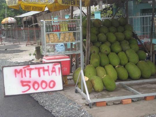 Mít Thái đầy vườn, giá rớt thê thảm - 5