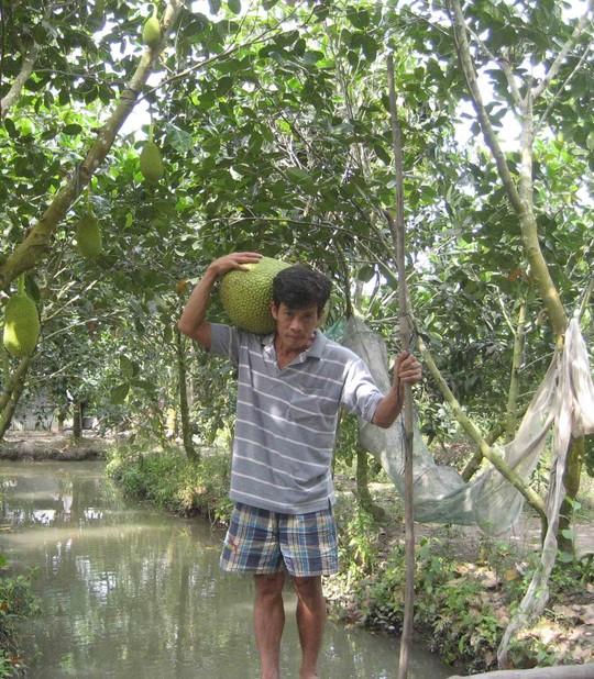 Mít Thái đầy vườn, giá rớt thê thảm - 6