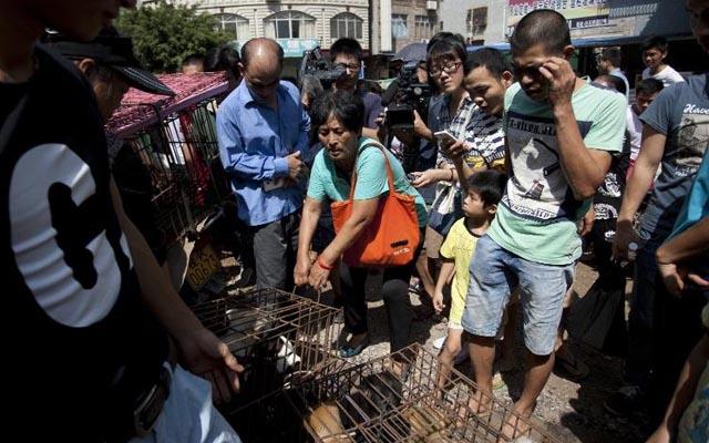 Lễ hội thịt chó TQ: Trả 24 triệu đồng cứu mạng 100 con chó - 1