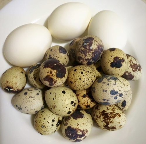 Mách bạn cách luộc trứng không cần nước - 4