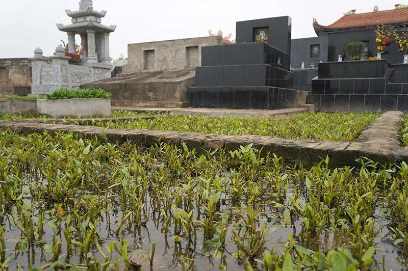 Hãi hùng: Rau xanh mơn mởn trên những nấm mồ giữa Thủ đô - 2
