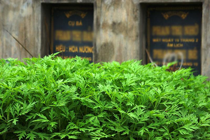 Hãi hùng: Rau xanh mơn mởn trên những nấm mồ giữa Thủ đô - 7