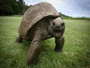 Phi thường - kỳ quặc - Rùa biển khổng lồ tắm lần đầu tiên sau hơn 184 năm