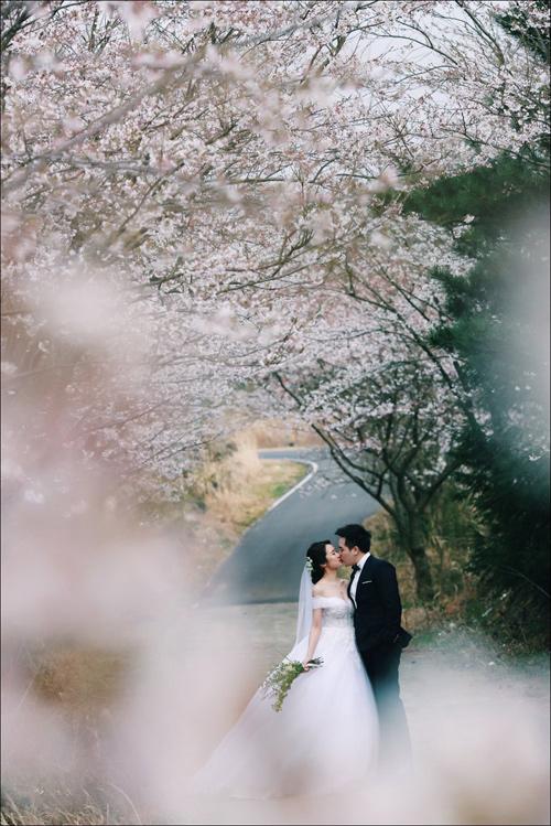Ảnh cưới bên hoa anh đào Hàn Quốc mê hoặc giới trẻ - 2