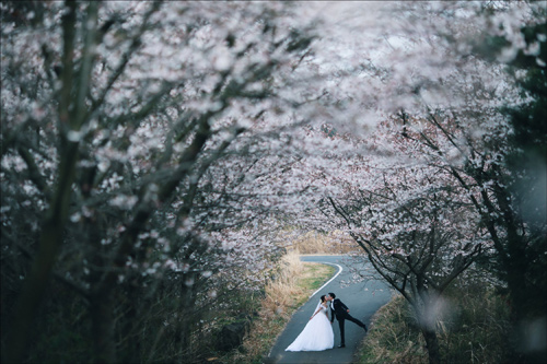 Ảnh cưới bên hoa anh đào Hàn Quốc mê hoặc giới trẻ - 1
