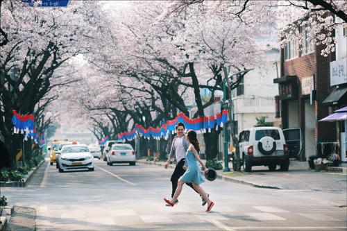 Ảnh cưới bên hoa anh đào Hàn Quốc mê hoặc giới trẻ - 6