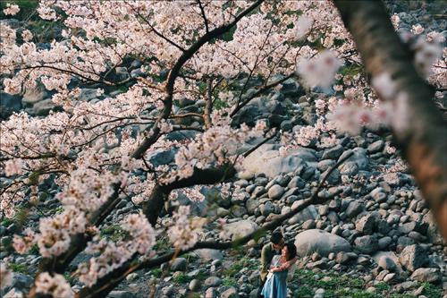 Ảnh cưới bên hoa anh đào Hàn Quốc mê hoặc giới trẻ - 7
