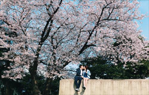 Ảnh cưới bên hoa anh đào Hàn Quốc mê hoặc giới trẻ - 8