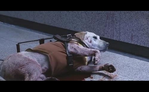 Rơi nước mắt với cảnh phim chú chó hi sinh cứu chủ - 2