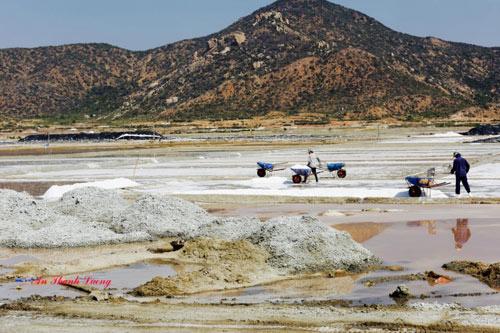 Về Ninh Thuận ngắm ruộng muối, ăn nho vườn - 2