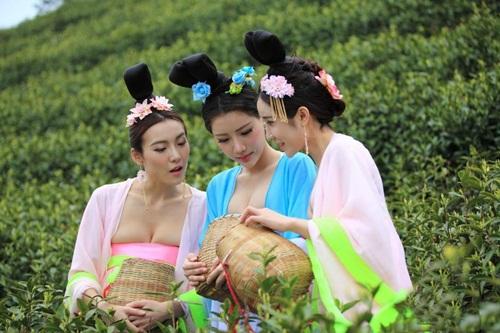 Thiếu nữ Trung Quốc ăn mặc nóng bỏng đi hái trà - 2