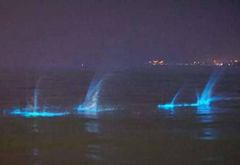 TQ: Nước biển phát sáng xanh kì quái giữa đêm - 3