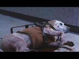 Rơi nước mắt với cảnh phim chú chó hi sinh cứu chủ