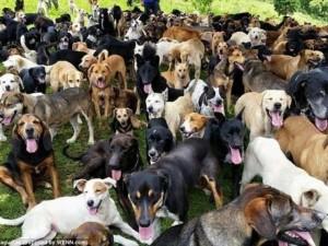 """""""Thiên đường"""" của 1.000 chó hoang ở Costa Rica"""