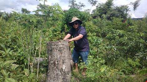 Bắt PGĐ và nhân viên bảo vệ rừng thuê… lâm tặc phá rừng - 1