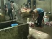Video An ninh - Quảng Bình: Lợn bị bệnh vẫn được… cấp phép giết mổ!
