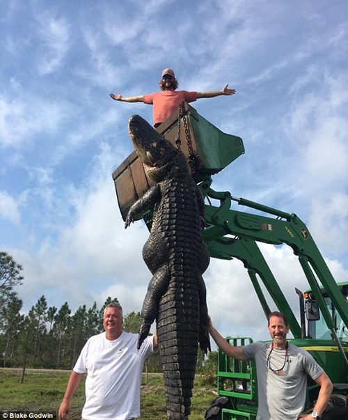 Bắt cá sấu nặng gần 300 kg ngay trong ao nhà - 2