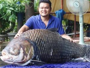 """Tin tức trong ngày - Cá hô khổng lồ từ Biển Hồ """"bơi"""" về Sài Gòn"""