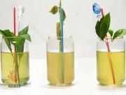 Ẩm thực - Cách pha 3 loại trà thảo mộc tốt cho sức khỏe