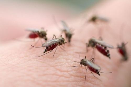 Virus Zika có thể gây liệt và tàn tật vĩnh viễn? - 1
