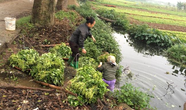 Hà Nội lập 5 đoàn kiểm tra an toàn vệ sinh thực phẩm - 1