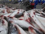 """Thị trường - Tiêu dùng - Trung Quốc ồ ạt mua cá tra, coi chừng """"bẫy giá ảo"""""""